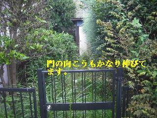 f0031037_17593677.jpg