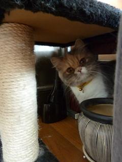 猫のお友だち パティーちゃん編。_a0143140_1424915.jpg