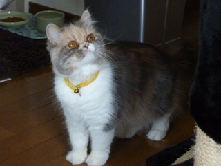 猫のお友だち パティーちゃん編。_a0143140_1425189.jpg