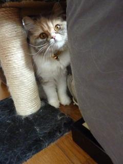 猫のお友だち パティーちゃん編。_a0143140_14254831.jpg