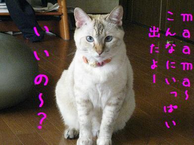 b0151748_12143570.jpg