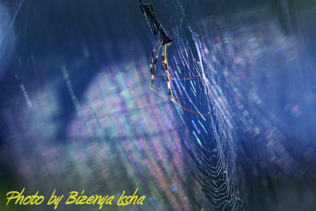 『蜘蛛』_d0086248_6555794.jpg