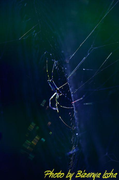 『蜘蛛』_d0086248_6561357.jpg