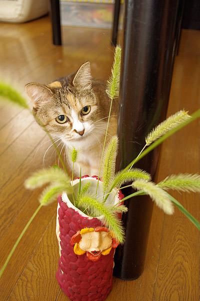 プーちゃん、猫じゃらしフェチ!_a0028451_12354548.jpg