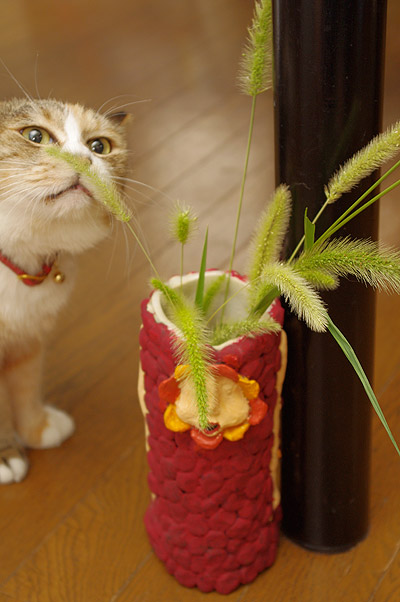 プーちゃん、猫じゃらしフェチ!_a0028451_12362718.jpg