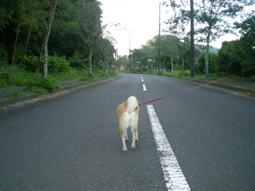 2010年8月27日(金)新米出たよ~!_f0060461_922676.jpg