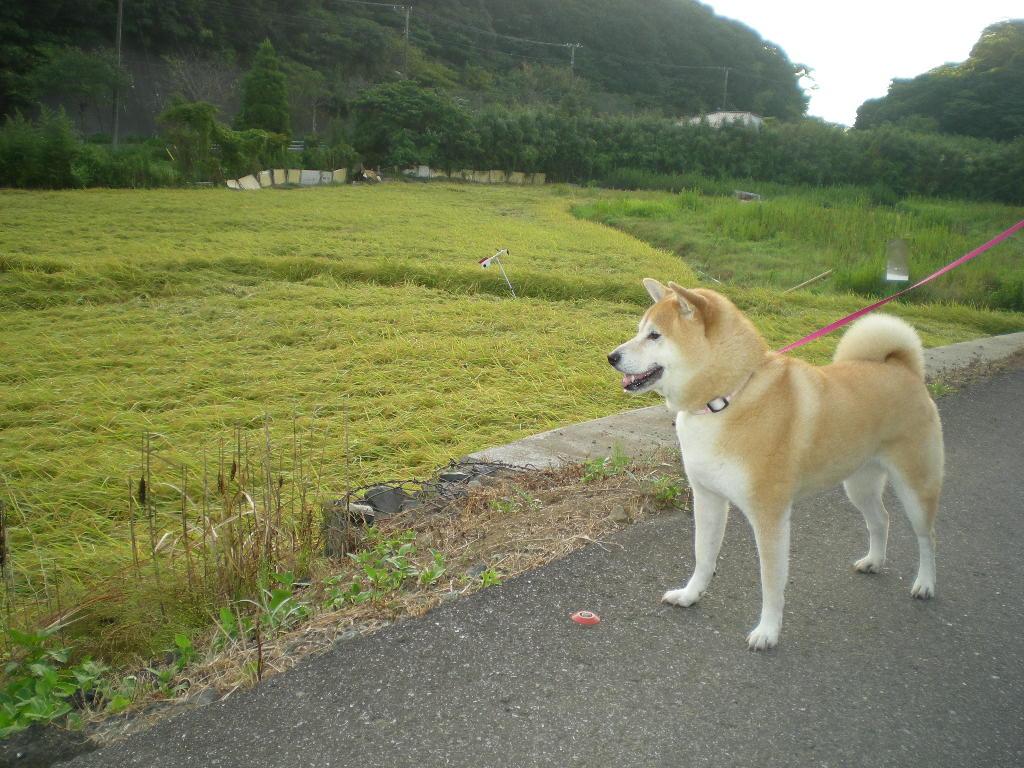 2010年8月27日(金)新米出たよ~!_f0060461_9282278.jpg