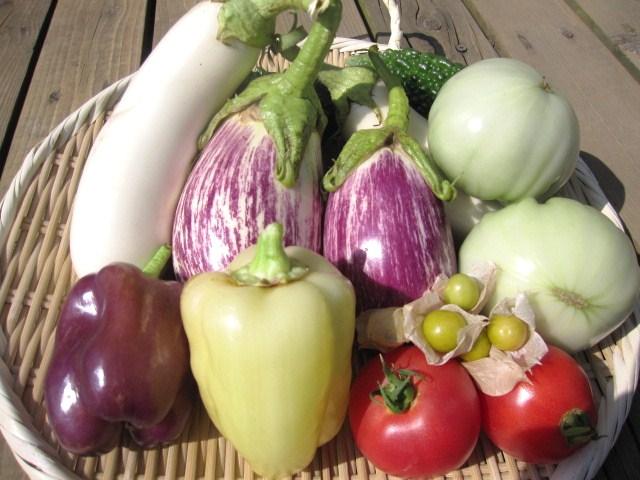 夏野菜_f0073070_1231777.jpg