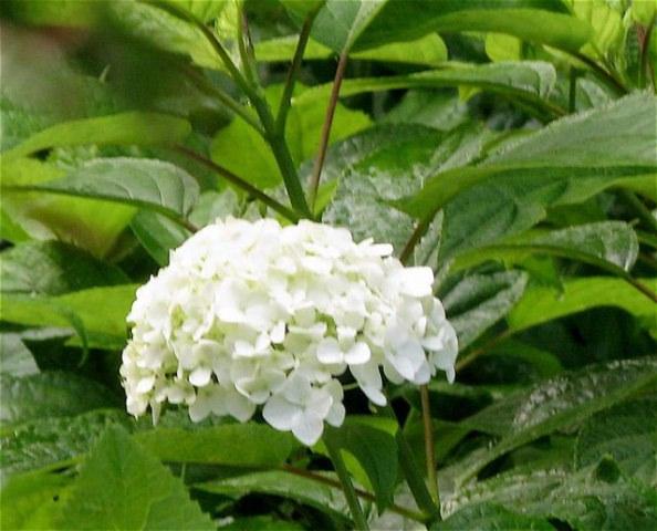 雨のなかの花たち〜(六甲山ー日本)_f0119071_21473840.jpg