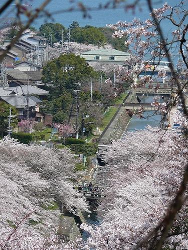 大津 琵琶湖疎水の桜_c0196076_10404120.jpg