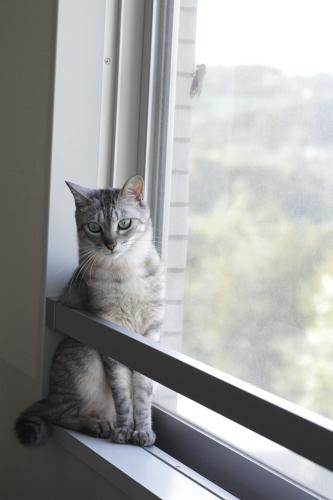 窓を開けて欲しいお嬢さん