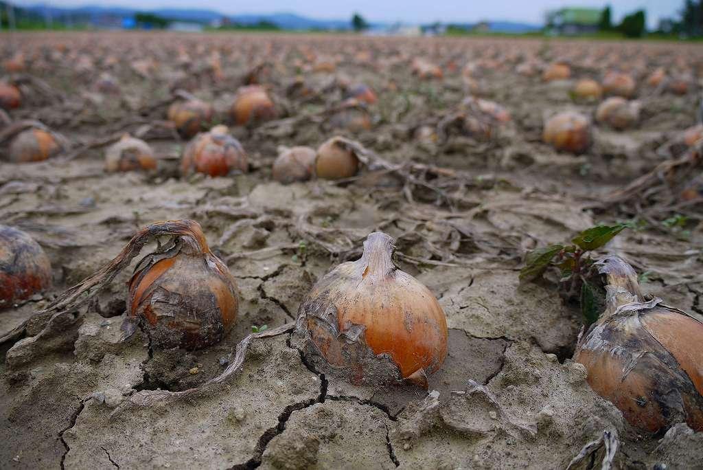 収穫の秋_f0138096_10245357.jpg
