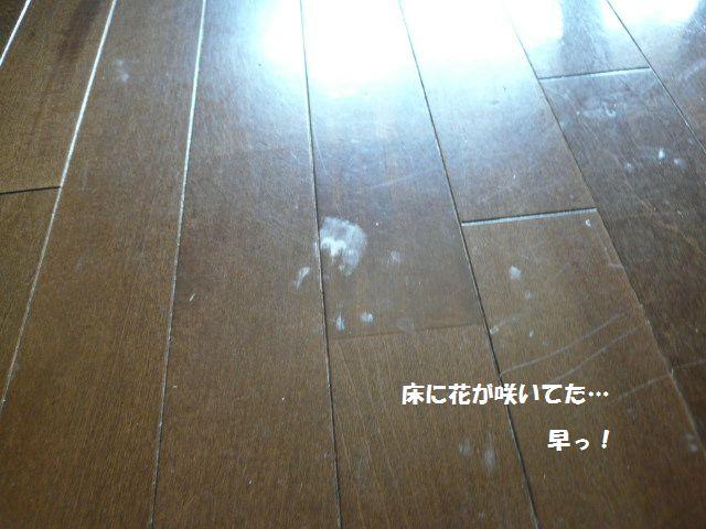 e0094407_0523544.jpg