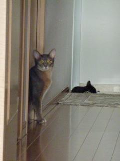猫のお友だち 庄九朗くん 来未ちゃん編。_a0143140_18402026.jpg