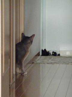 猫のお友だち 庄九朗くん 来未ちゃん編。_a0143140_18404431.jpg