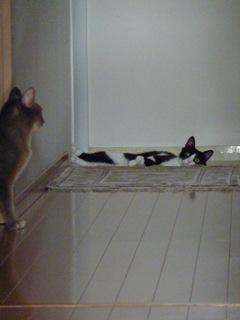 猫のお友だち 庄九朗くん 来未ちゃん編。_a0143140_18422282.jpg