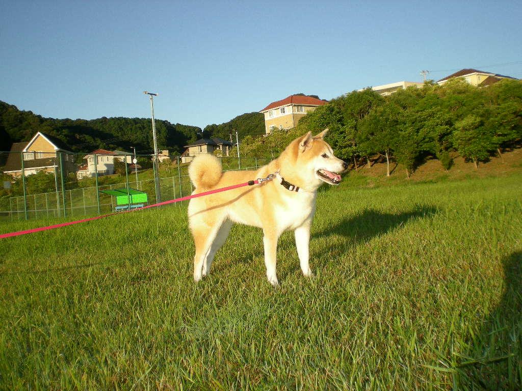 2010年8月28日(土)心ちゃんのプチ散歩!_f0060461_9102918.jpg