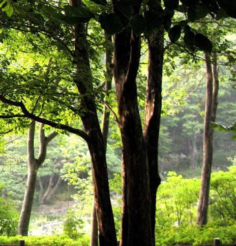 雨のなかの花たち〜(六甲山ー日本)_f0119071_16591223.jpg