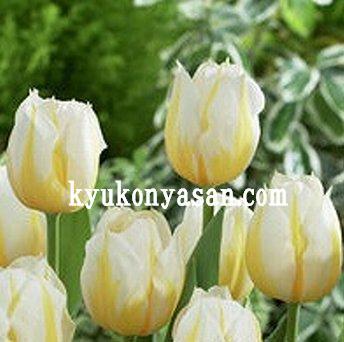 f0054197_22571647.jpg