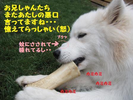 f0212597_10465481.jpg
