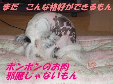 f0179203_826126.jpg