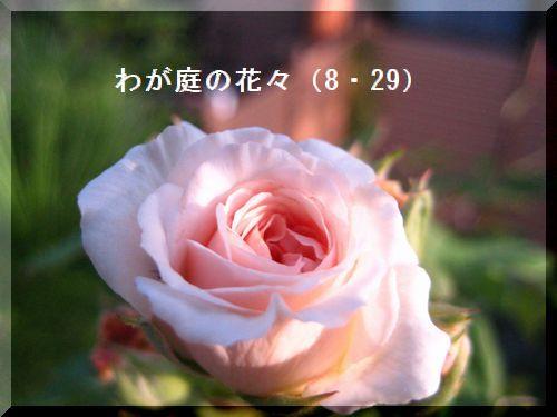 b0126308_2354531.jpg