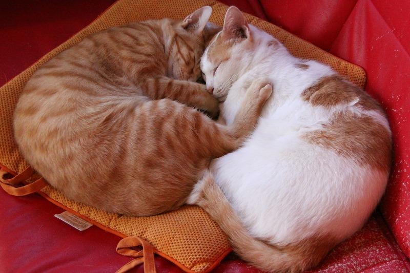 相模原市淵野辺「キャットカフェ 二階の猫」_d0167436_7173090.jpg