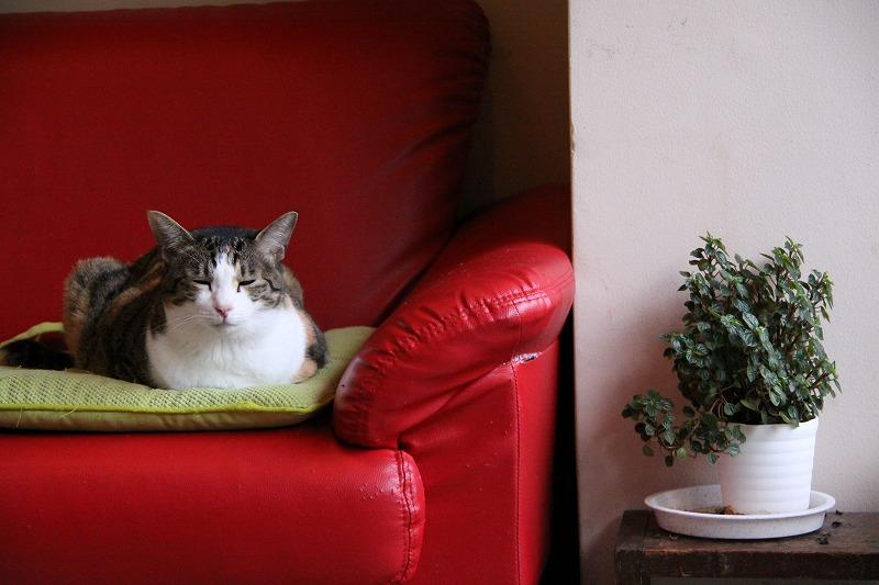 相模原市淵野辺「キャットカフェ 二階の猫」_d0167436_7173686.jpg