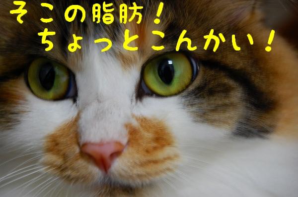 c0181639_1345112.jpg