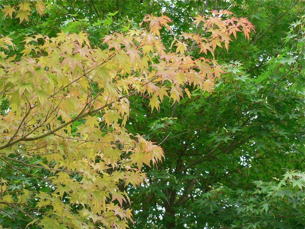 秋は着実にやってきている_d0001843_23573797.jpg