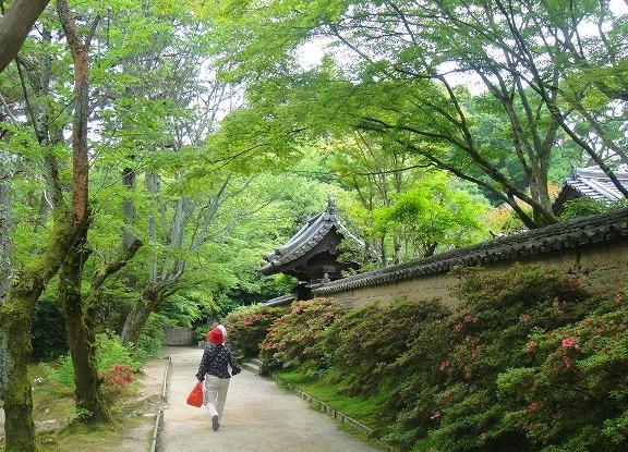 <2010年6月>伊勢路・奈良の旅(その3):「奈良・西ノ京の国宝寺」_c0119160_11204271.jpg