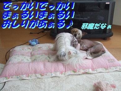 f0179203_7524086.jpg