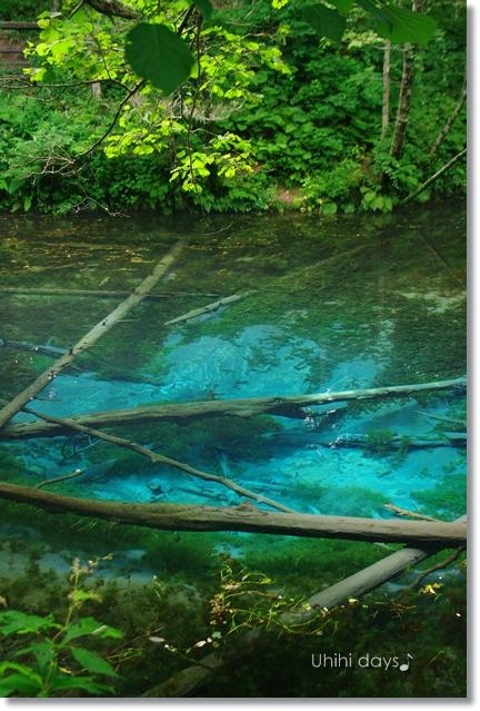 摩周湖の湧き水・・・神の子池 _f0179404_2145376.jpg