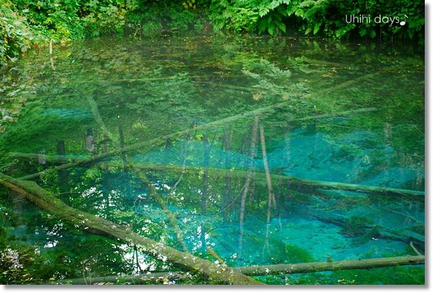 摩周湖の湧き水・・・神の子池 _f0179404_2174347.jpg