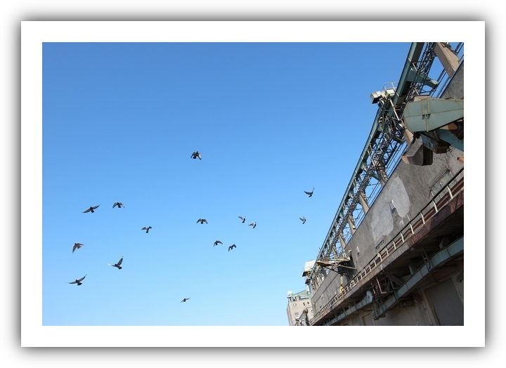 Pigeons_f0033205_8175121.jpg