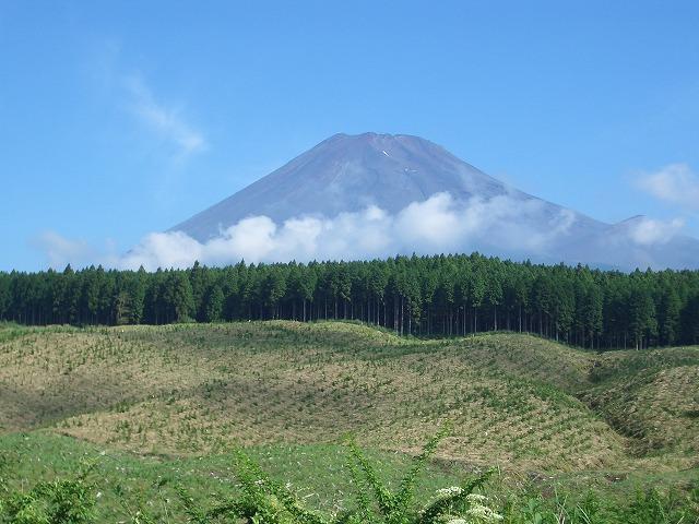 富士山国有林での下草刈りとトコロテン_f0141310_2225113.jpg