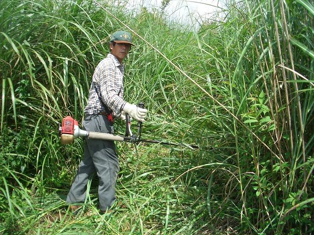 富士山国有林での下草刈りとトコロテン_f0141310_2226334.jpg