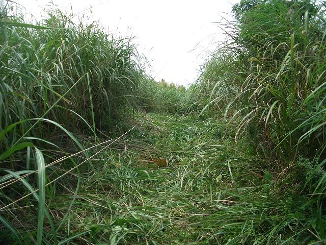 富士山国有林での下草刈りとトコロテン_f0141310_22271017.jpg