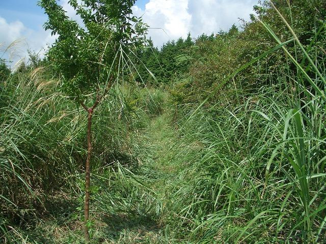 富士山国有林での下草刈りとトコロテン_f0141310_2227239.jpg