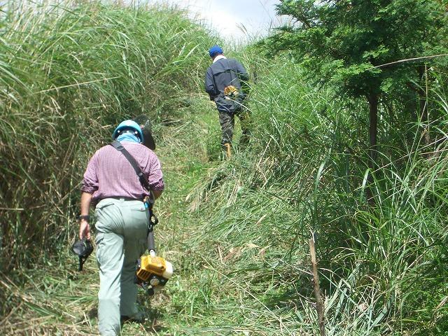 富士山国有林での下草刈りとトコロテン_f0141310_22274151.jpg