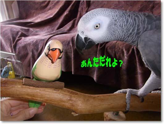 c0133013_22481333.jpg