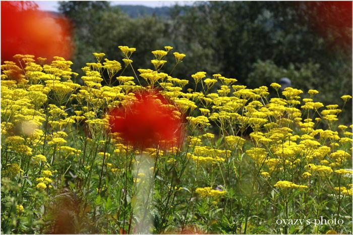 花と・・_a0071514_19344571.jpg