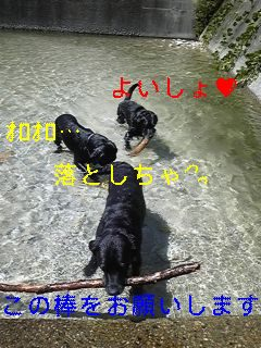 川遊び_f0148927_1910144.jpg