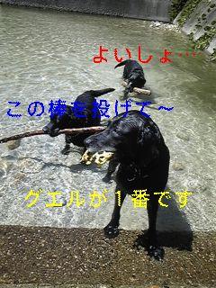 川遊び_f0148927_19115642.jpg