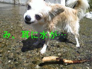 川遊び_f0148927_19151276.jpg