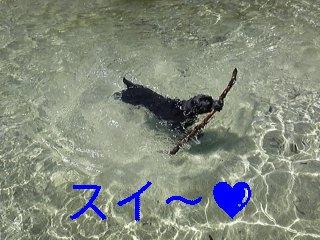川遊び_f0148927_19171265.jpg
