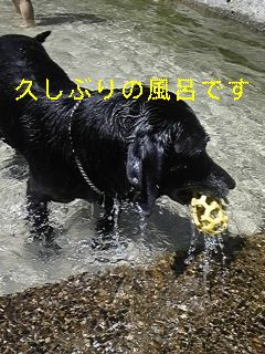 川遊び_f0148927_1920428.jpg