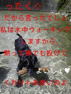 川遊び_f0148927_1927949.jpg