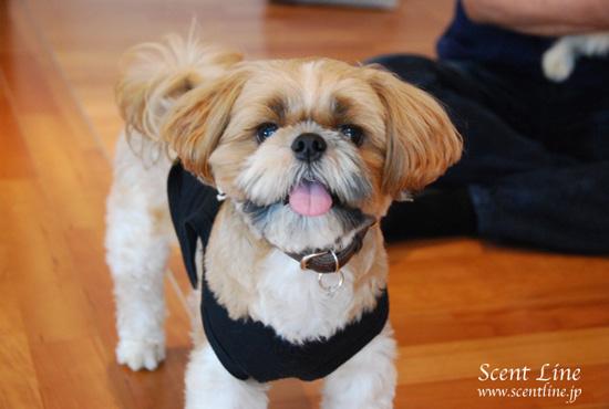 「愛犬の為の整体教室」第1回の模様_c0099133_2342226.jpg