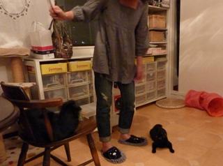 キャットシッターがやってきた猫 のぇるろった編。_a0143140_2531484.jpg